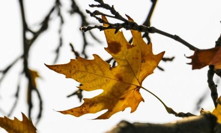 Yellow Orange autum leaves hanging over sky