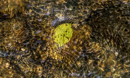 Design formed by ripple, light, leaf and colors in water of a stream