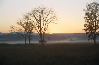 Early winter morning Kanha