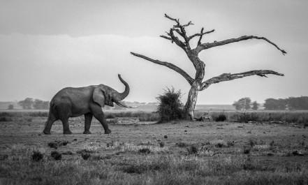 Amboselli , Kenya