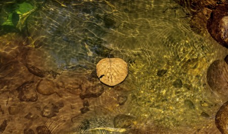 Colorful design formed by ripple, light, leaf and colors in water of a stream