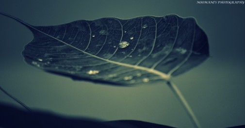 Few drops of life