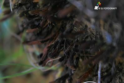 Falling moss